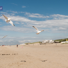 rivageverhuur-nieuwvliet-breskens-zee-strand-kust-4923.jpg