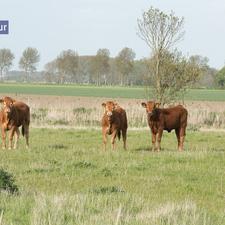 rivage-nieuwvliet-breskens-cadzand-0638.jpg